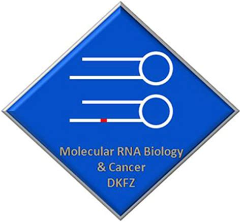 Molecular and Cellular Biology, MS, MSDegree DetailsASU