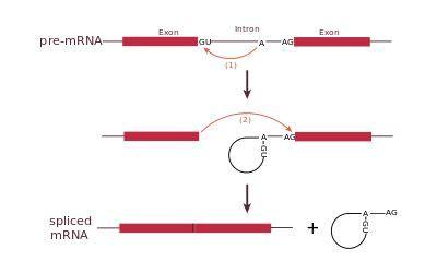Bachelor thesis molecular biology